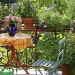 Balkon Pflanzen